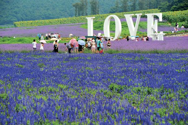 """""""紫色""""北京景点:蓝调薰衣草庄园"""