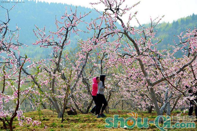 北京去平谷赏桃花包天、湖洞水一日游